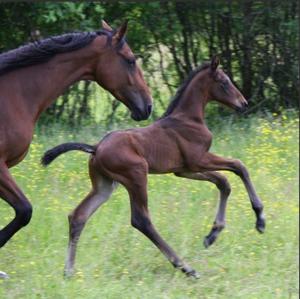 TomCat som liten! Eller ja, liten och liten... ni ser ju själva, rejäla bakben redan då! Mamma Taleya till vänster.
